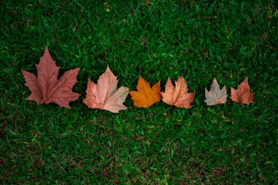 feuilles sur herbes